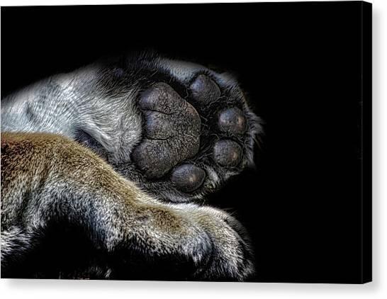 Bear Claws Canvas Print - Paw Prints by Martin Newman