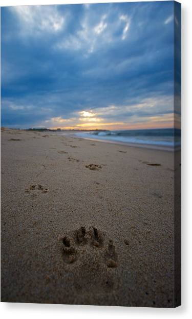Pawprints Canvas Print by Mike Horvath