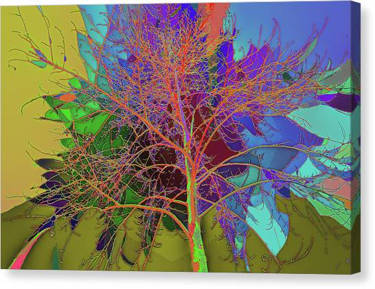 P C C Elm In The Wait Of Bloom Canvas Print