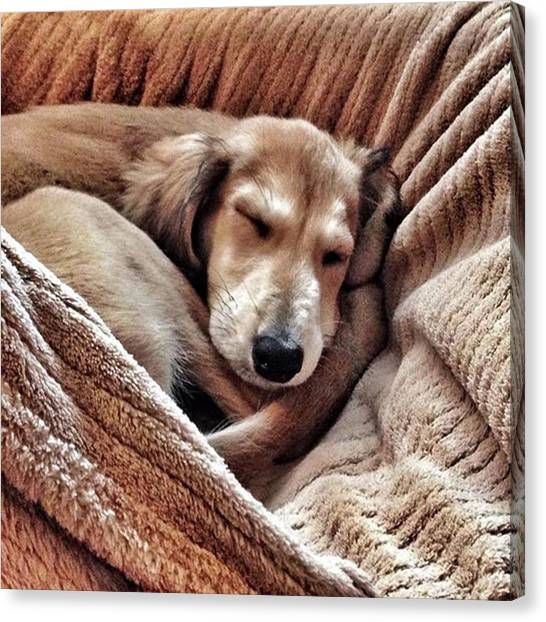 Canvas Print - Peace At Last #saluki by John Edwards