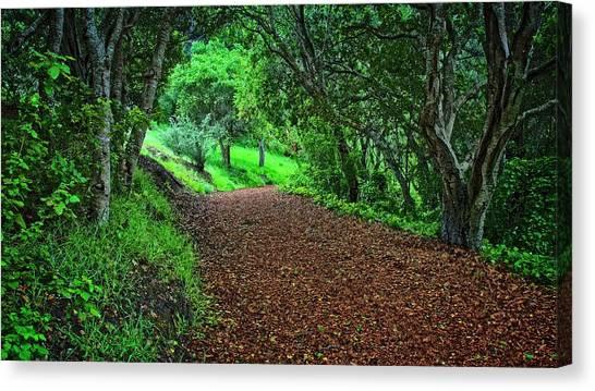 Peace Of Heaven On Earth, Carmel, California Canvas Print