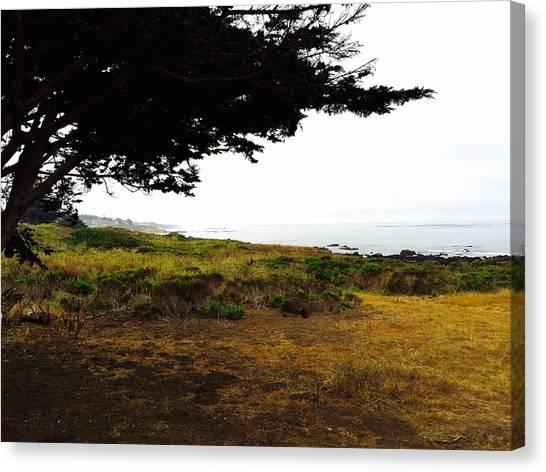 Peaceful Coast Canvas Print