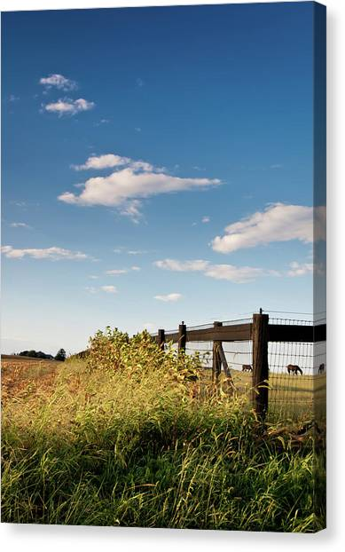 Peaceful Grazing Canvas Print