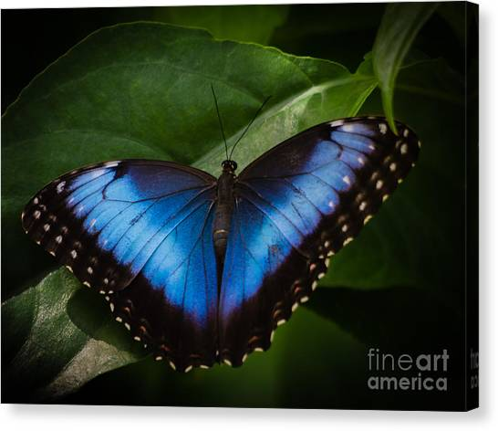 Peaceful Landing Canvas Print