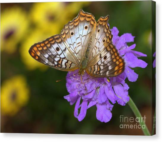 Anartia Jatrophae Canvas Print - Peaceful White Peacock Butterfly  by Ruth Jolly