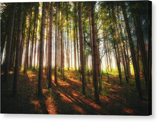 The Nature Center Canvas Print - Peaceful Wisconsin Forest 2 - Spring At Retzer Nature Center by Jennifer Rondinelli Reilly - Fine Art Photography