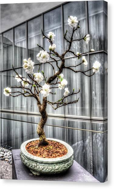 Peach Bonsai Tree Canvas Print