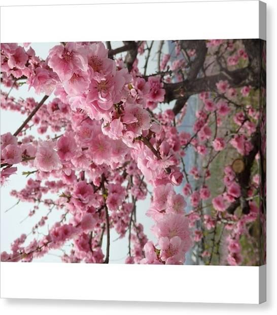 Fairies Canvas Print - Peach Flowers by Kanna Fairy