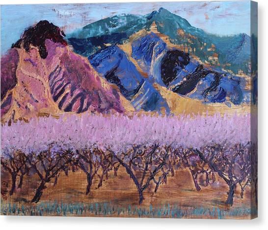 Peach Orchard Canigou Canvas Print
