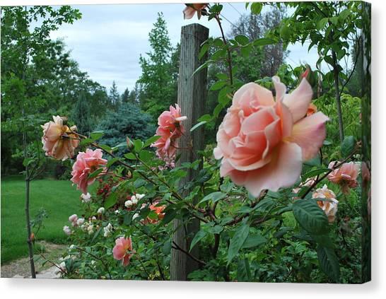 Peach Rose Canvas Print by Linda Sramek