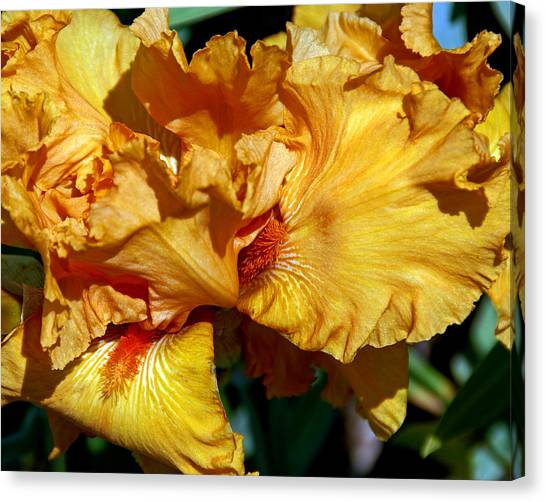 Peachy Petals Canvas Print by Lynda Lehmann