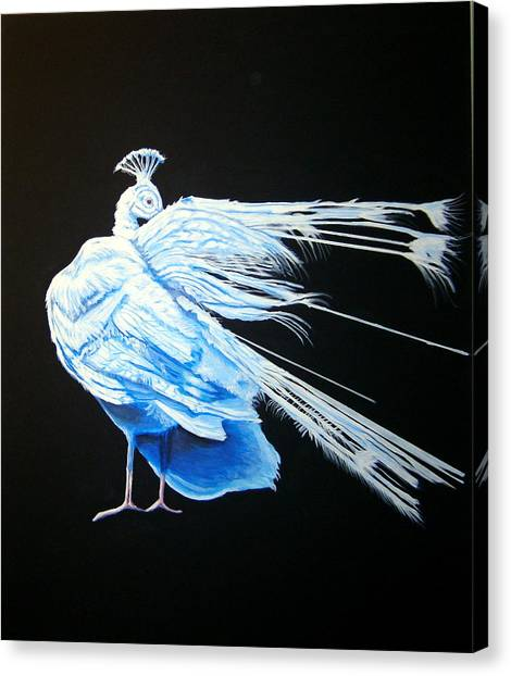 Peacock 2 Canvas Print