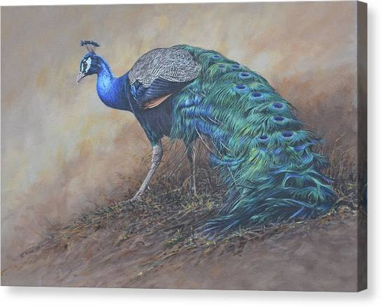 Canvas Print featuring the painting Peacock by Alan M Hunt