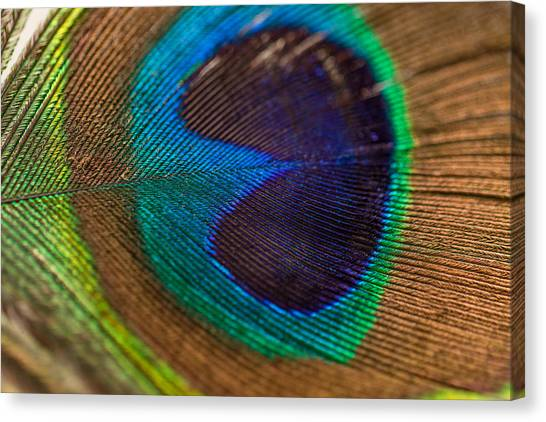 Peacock Feather Macro Detail Canvas Print