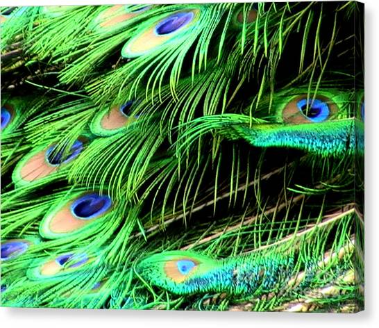 Peacock Feathers Canvas Print by Toon De Zwart