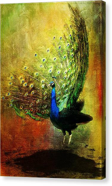 Peacock In Full Color Canvas Print