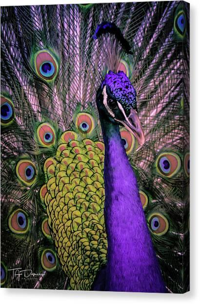 Peacock In Purple 2 Canvas Print