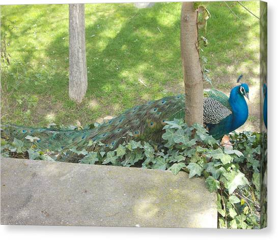 Fruit Trees Canvas Print - Peacock by Mariel Mcmeeking