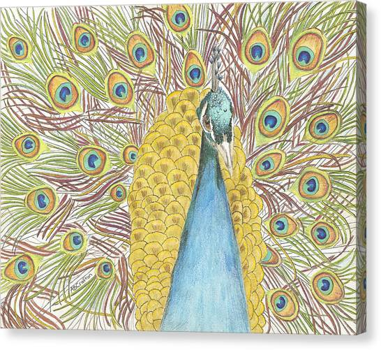 Peacock One Canvas Print