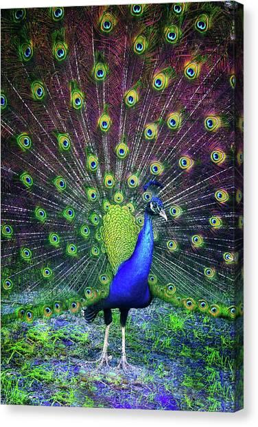 Peacock Series 9801 Canvas Print