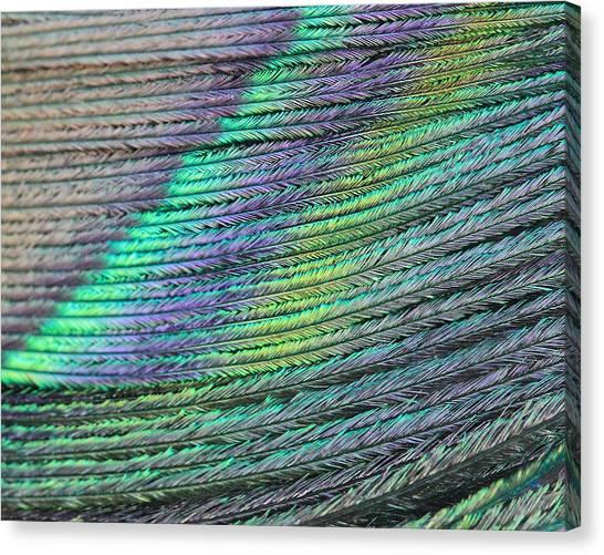 Peacock Stripes Canvas Print