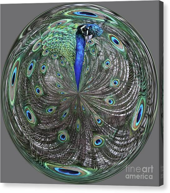 Peacock Swirl #2 Canvas Print