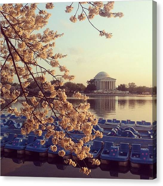 Jefferson Memorial Canvas Print - Jefferson Memorial Blossoms by Laurie White