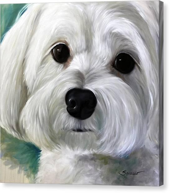 Maltese Canvas Print - Peanut by Mary Sparrow