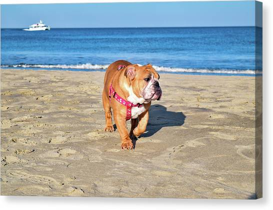 Peanut On The Beach Canvas Print