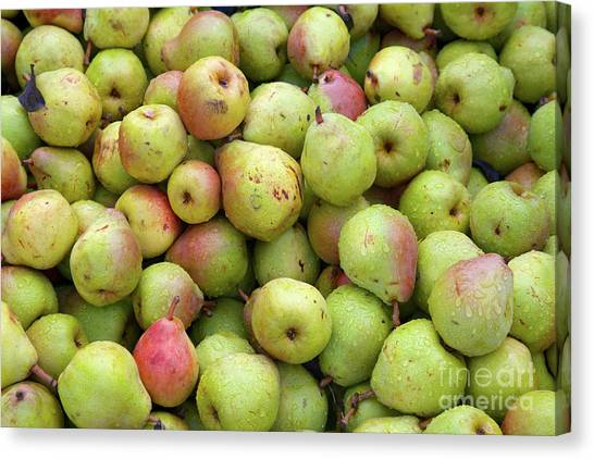 Pear Harvest Canvas Print
