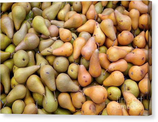 Pears At The Harvest Canvas Print