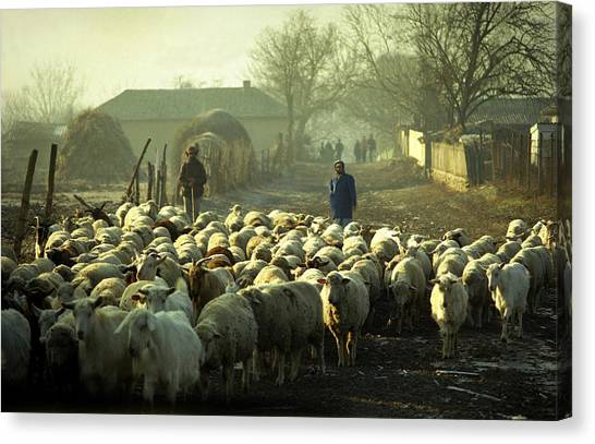 Peasants And Herd On The Village Path Canvas Print