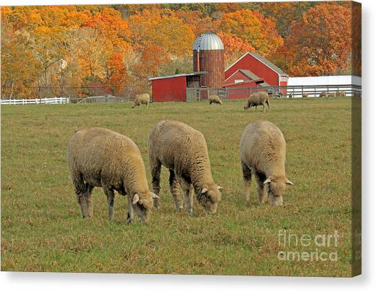 University Of Rhode Island Uri Canvas Print - Peckham Farm by Jim Beckwith