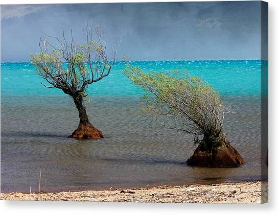 Peculiar Trees Canvas Print