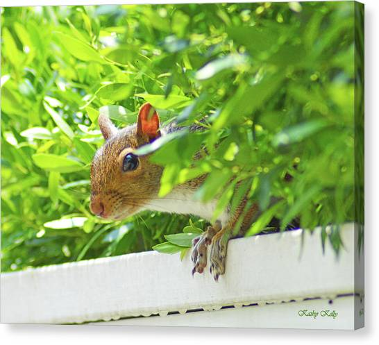 Peek-a-boo Gray Squirrel Canvas Print