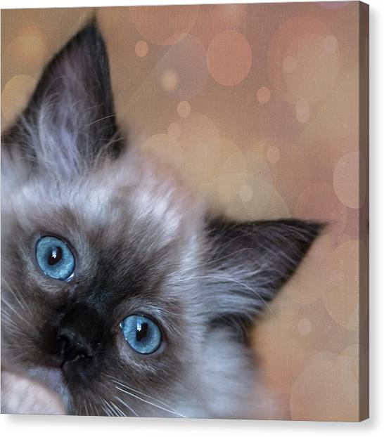 Peek-a-boo 2 Canvas Print