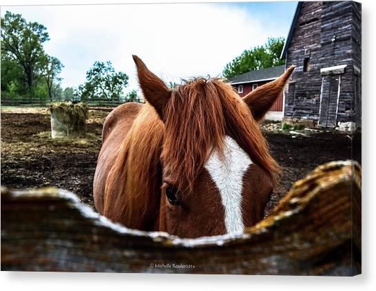 Brown Ranch Trail Canvas Print - Peek A Boo by Michelle Ressler