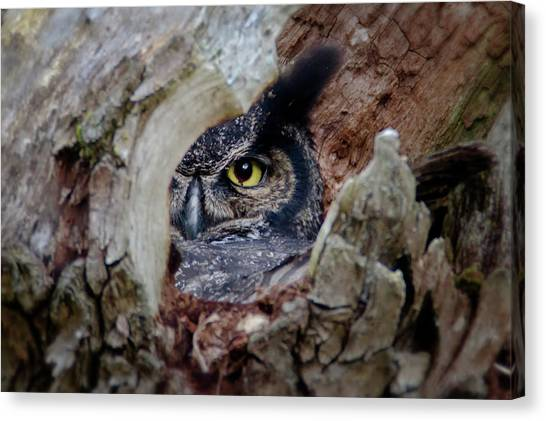 Peek A Boo Owl Canvas Print