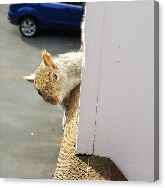 Small Mammals Canvas Print - Peek-a-boo This Little Guy Was At My by Jeff Foliage