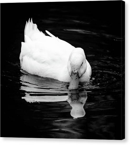Peek-ing Duck Canvas Print