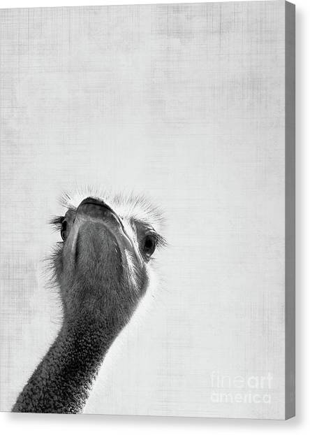 Ostriches Canvas Print - Peekaboo Ostrich by Delphimages Photo Creations