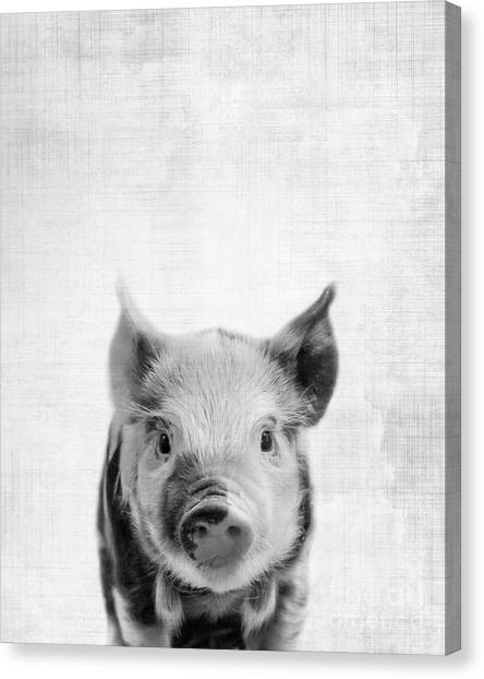 Pig Farms Canvas Print - Peekaboo Piglet by Delphimages Photo Creations