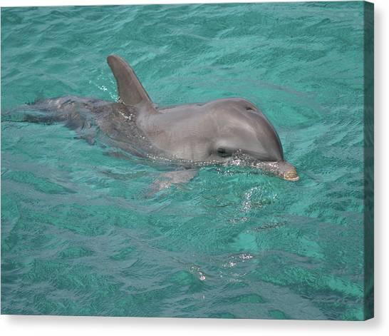 Peeking Dolphin Canvas Print