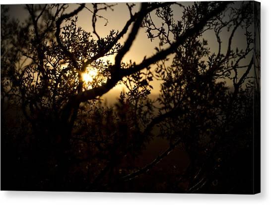 Peeking Sun Canvas Print by Mike Hill