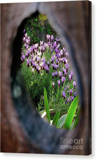 Peephole Garden Canvas Print