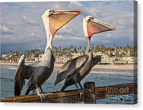 Pelican - A Happy Landing Canvas Print