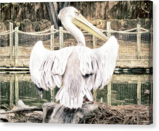 Canvas Print featuring the photograph Pelican by Alison Frank