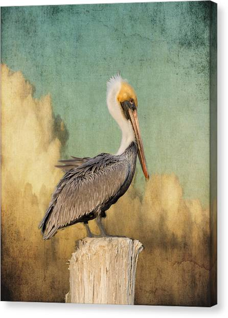 Pelican And Clouds Canvas Print