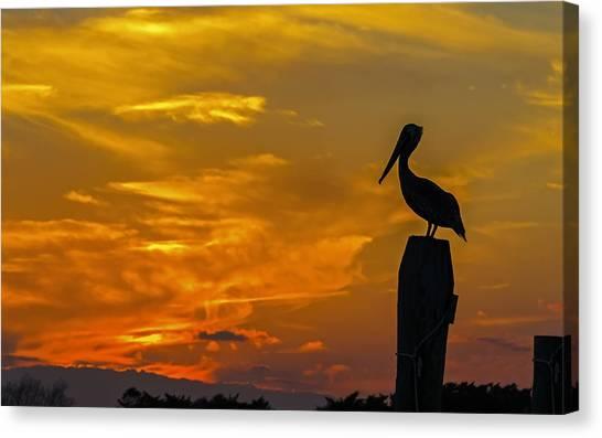 Pelican At Silver Lake Sunset Ocracoke Island Canvas Print