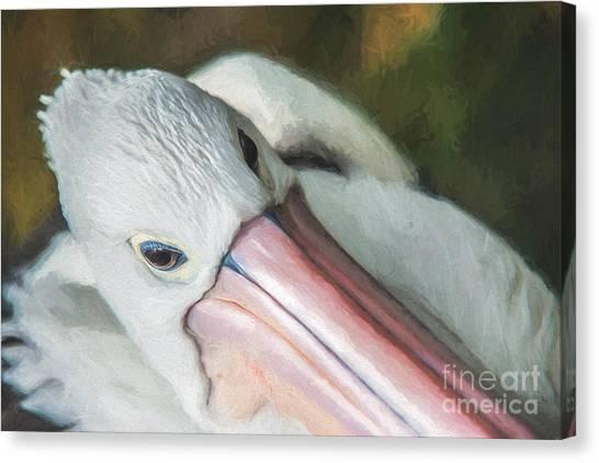 Pelican Brief   Go6 Canvas Print